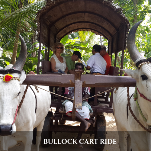 BULLOCK CART RIDE (2)