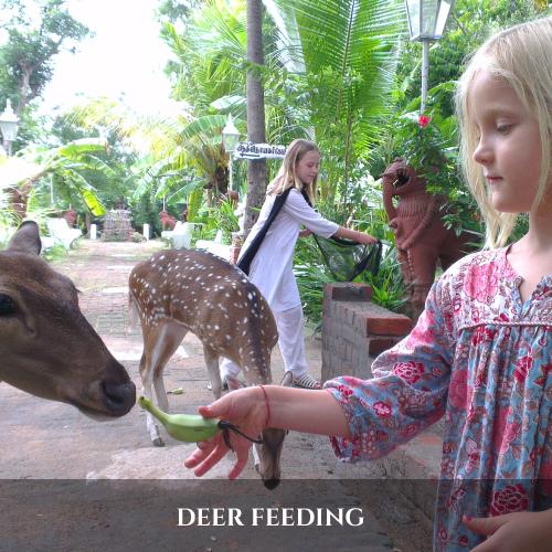 DEER FEEDING (1)